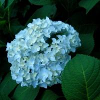Cee's Fun Foto Challenge: One Single Flower
