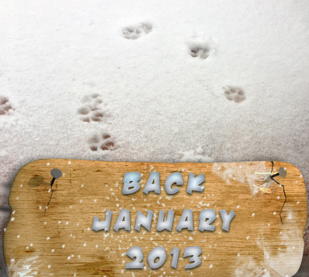 back jan 2013 pic