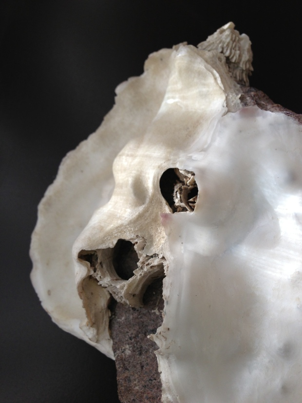 barnacled shell