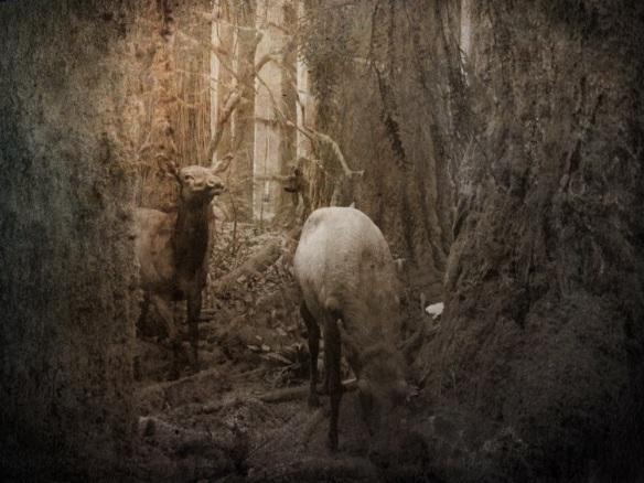 nature animals