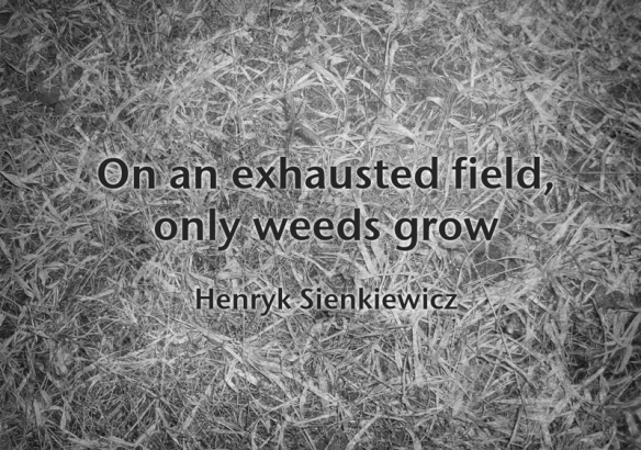 sienkevicz-quote